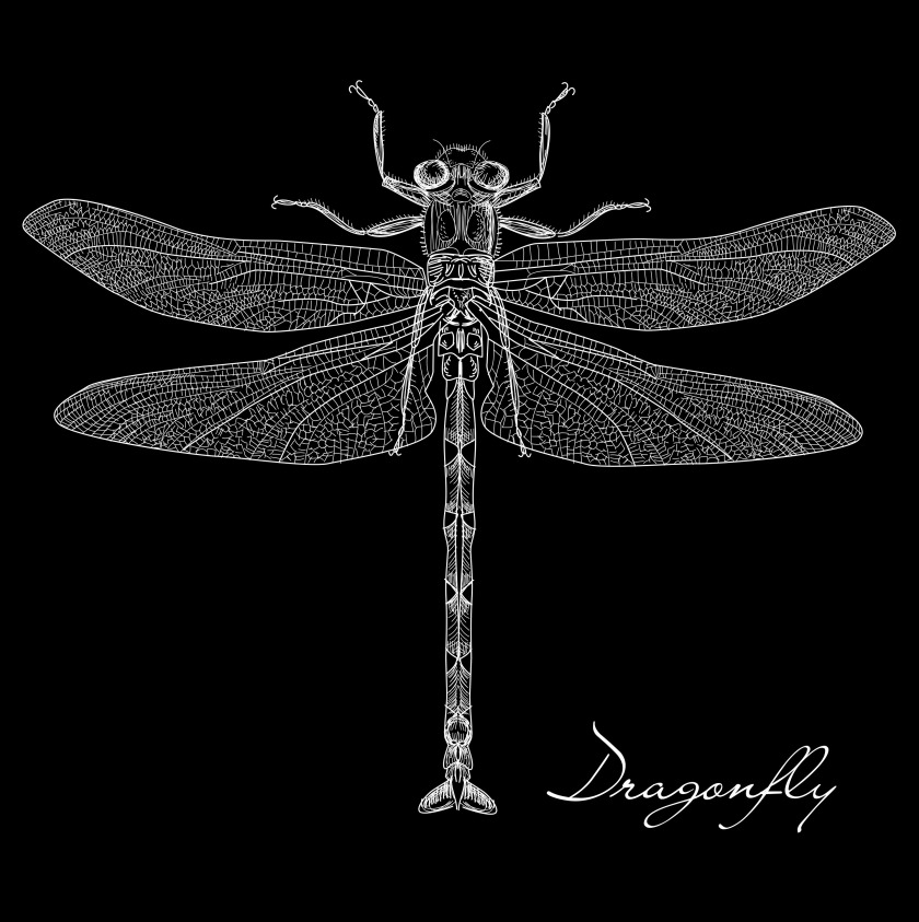 detailed-dragonfly-vector_GkWIRuuO.jpg