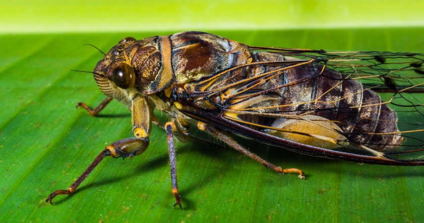 insect-new-insect-whopper-close-53540